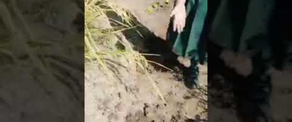 Embedded thumbnail for Tree plantation