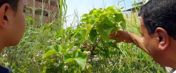 Embedded thumbnail for Showing Students Jatropha Seedlings in Damietta University